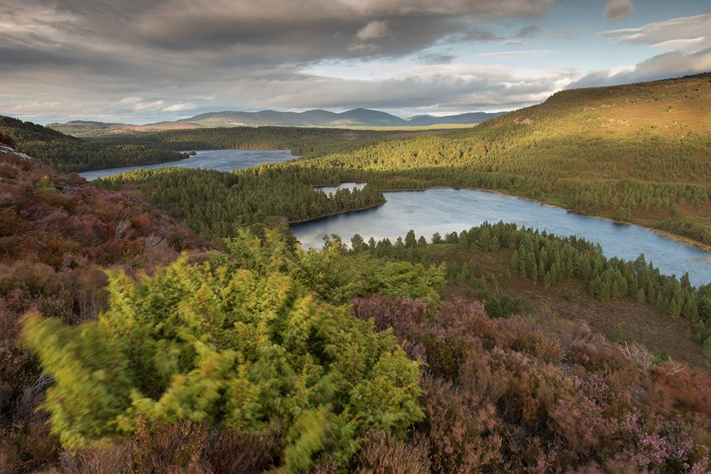 Highland Heather - Photographic Tour - SCOTLAND: Cairngorms National Park