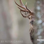 CAIRNGORMS: A Photographer's Insight