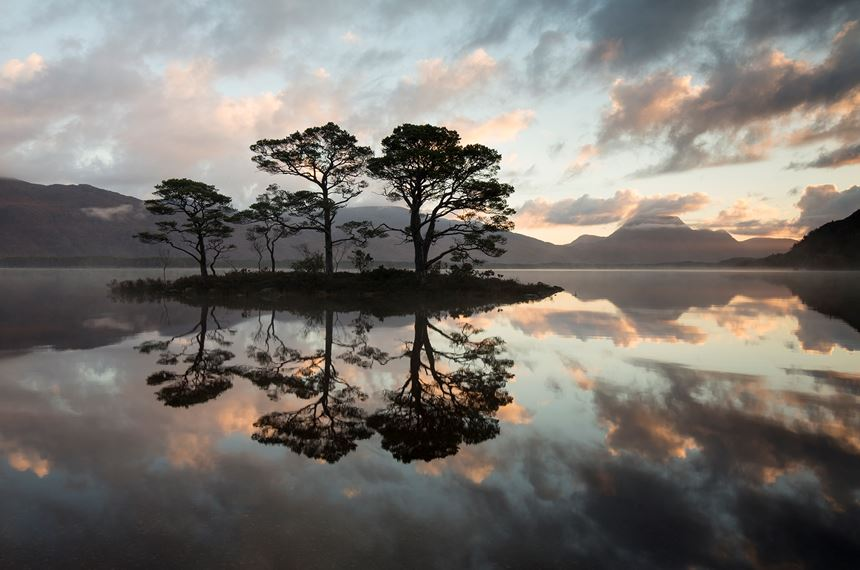 Scots pines silhouetted at sunrise, Loch Maree, Scotland. - Photo: Peter Cairns
