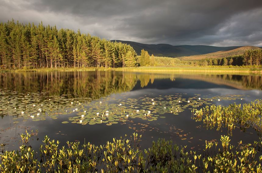 Stormy light over bog lochan, Glenfeshie, Scotland. - Photo: Peter Cairns