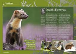 PP EcoViews July 2008 -