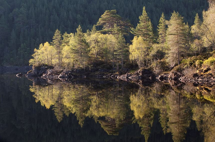 Dawn reflections in Loch Beinn a' Mheadhoin, Glen Affric, Scotland. - Photo: Peter Cairns