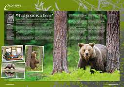 PP EcoViews Bears -