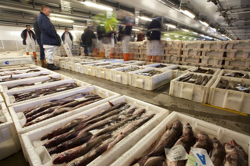 Industrialised predation at Peterhead Fish Market, Scotland. - Photo: Peter Cairns