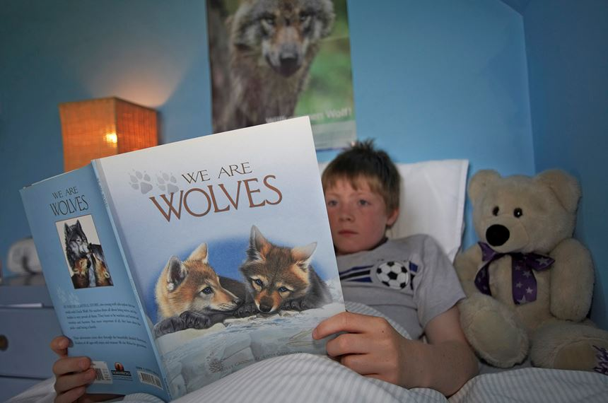 Boy reading wolf book in bed, Scotland. - Photo: Unspecified