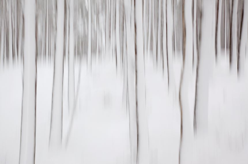 Abstract of winter pine forest, Inshriach Forest, Scotland. - Photo: Peter Cairns