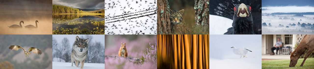 Sample images from the extensive image library covering a wide range of wildlife and landscape subjects from across the UK and northern Europe