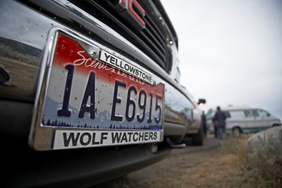 Licence plate on American car depicting support for wolves in Yellowstone National Park, USA