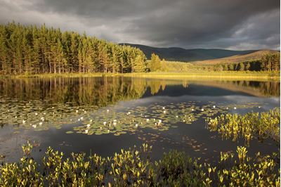 Stormy light over bog lochan, Glenfeshie, Scotland.